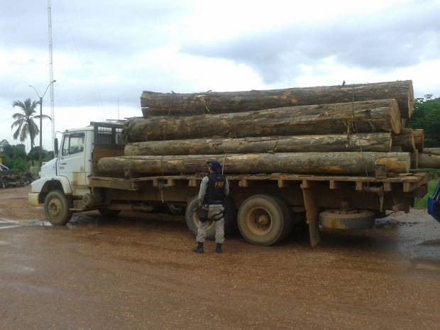 madeira-ilegal-presa-dom-eliseu-portal-tailandia