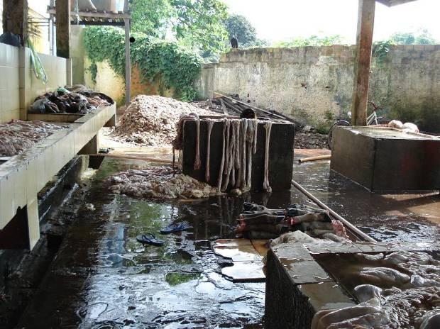 matadouro-ilegal-Capanema-portal-tailandia