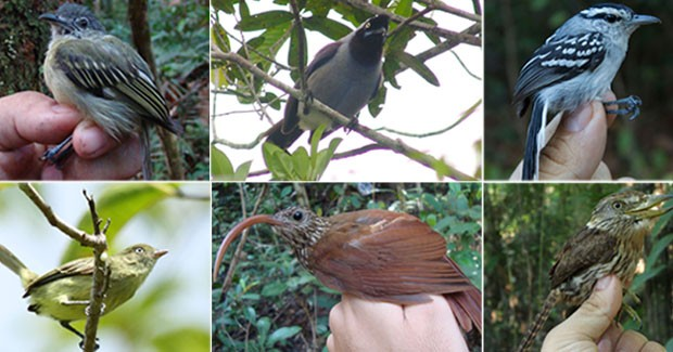 novas-aves-descobertas