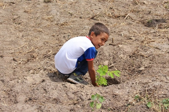 Criança plantando árvore nativa (Foto: Otoniel Oliveira /Ascom PMT)