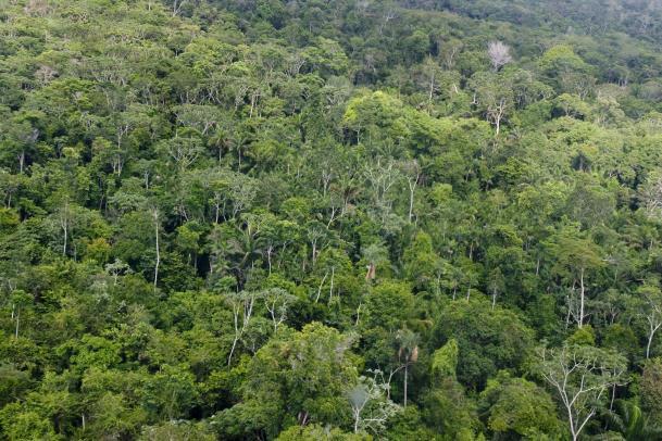 Depois de subir 38% em 2013 (2.346 km²), a taxa estimada de derrubada da floresta em 2014 diminuiu 22% (1.829 km²).