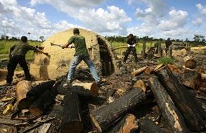 Agentes da Polícia Federal e fiscais do Ibama destroem forno de carvão em Tailândia (PA)