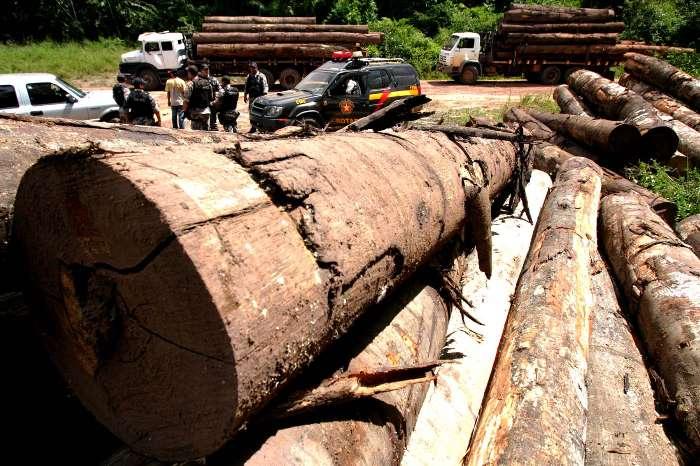 Início da Operação Arco de Fogo, de contenção do desmatamento da Amazônia, perpetrada pela Polícia Federal, Força Nacional e Ibama para fiscalizar as madeireiras em Tailândia, no Pará, 26/02/2008 (Foto: Beto Barata/AE)
