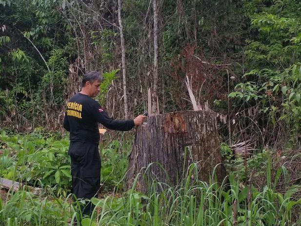 Espécie em extinção era extraída ilegalmente de área em preservação ambiental. (Foto: Divulgação/ Polícia Civil)