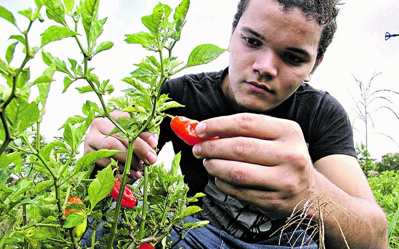 Daniel dos Santos do assentamento PA Assurini, em Altamira durante aula de produção de hortaliças na Transamazônica. (Foto: Diário do Pará)