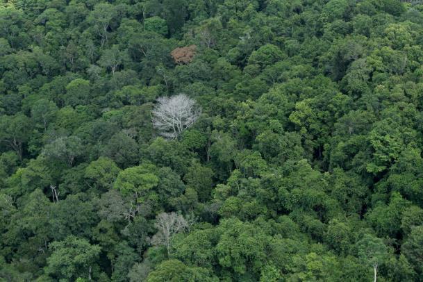 Nos últimos anos, Governo do Estado avançou no combate ao desmatamento, no ordenamento ambiental rural e a na produção sustentável