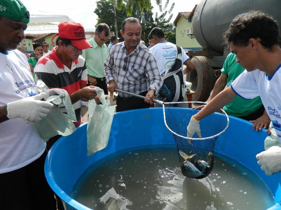 Primeira edição da Feira do Peixe Vivo em Tailândia - 2013 (Foto: divulgação)